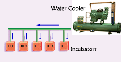 Water cooling system for chicken incubator